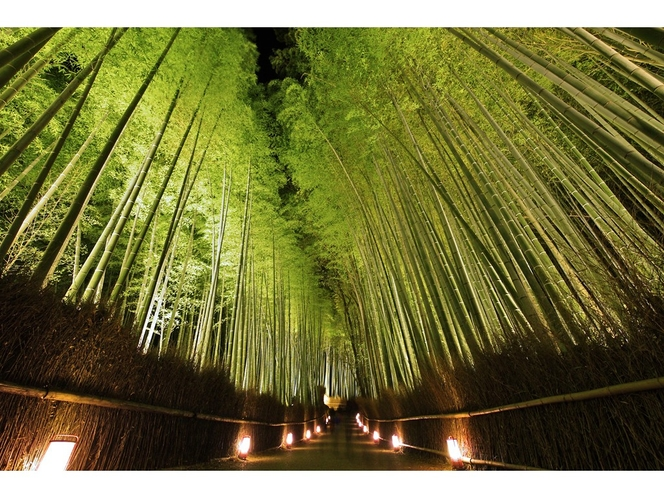 ◆観光◆嵐山花灯路