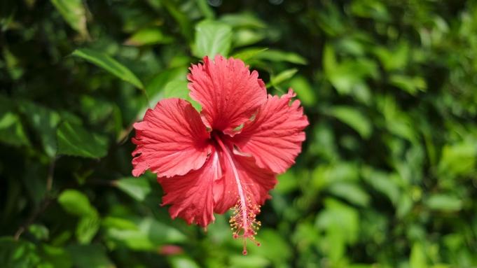 【レンタカー付★ECO】早めに石垣島に着いても、チェックアウト後の島巡りも楽々♪<朝食お弁当付き>