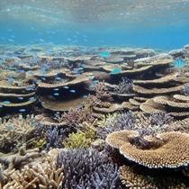 【幻の島でシュノーケリング】海中の魚がクリアに見える神秘の世界。まるで人魚の気分♪