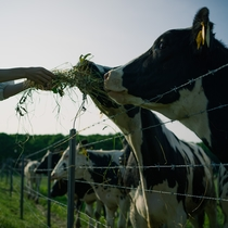 MAOIQの隣に広がるハイジ牧場では、牧場の動物たちとふれあうことができます