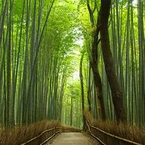 嵐山の竹林(竹林入口まで当館より徒歩約17分)