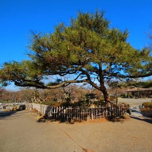 嵐山公園(当館より徒歩約5分)