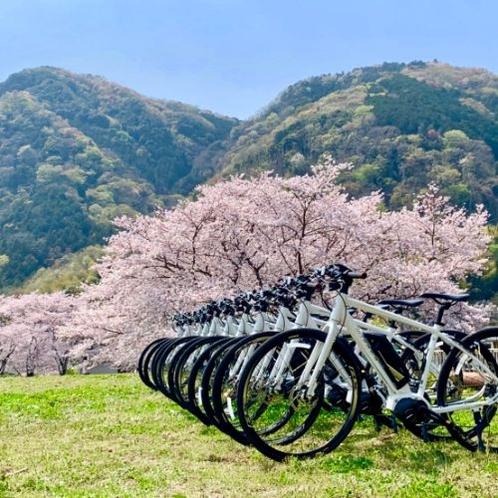 伊豆には数多くの桜の名所もございます。eBikeでちょっとした立ち寄りもいかがですか?