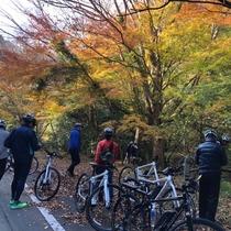 紅葉を見るなら修善寺へのサイクリングがおすすめ!虎渓橋や竹林の小径など、見所がたくさんあります。