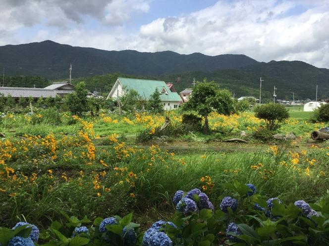 裏の花畑からの遠景です。