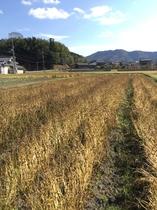 秋のソバ畑