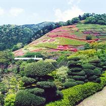 山の傾斜を利用した自然豊かな公園「姫の沢公園」(当館より車で約12分)