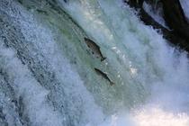 コテージ近傍の景勝地 サクララの滝