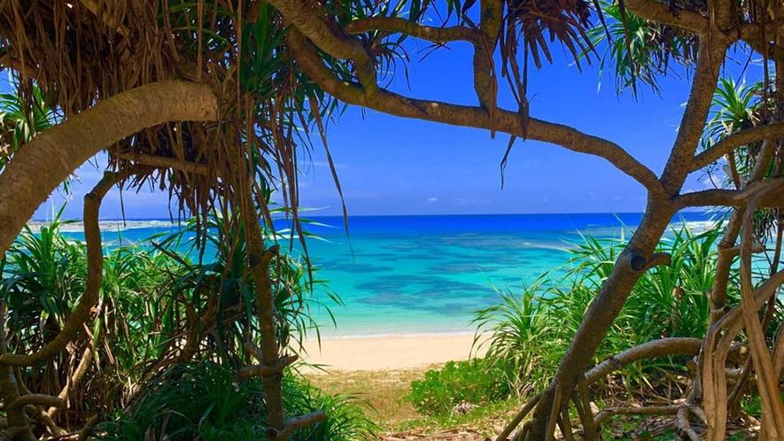 ・近くにあるサイクリングロードから見えるビーチ、散歩やジョギングに最適。