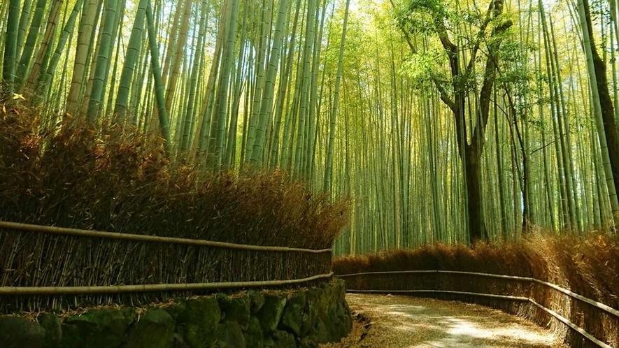嵐山の人気スポット・竹林の小径。しっとりとした雨上がりがオススメ。