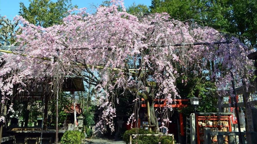 「日本最初の天満宮」とも号されている、水火天満宮は桜の名所としても有名。