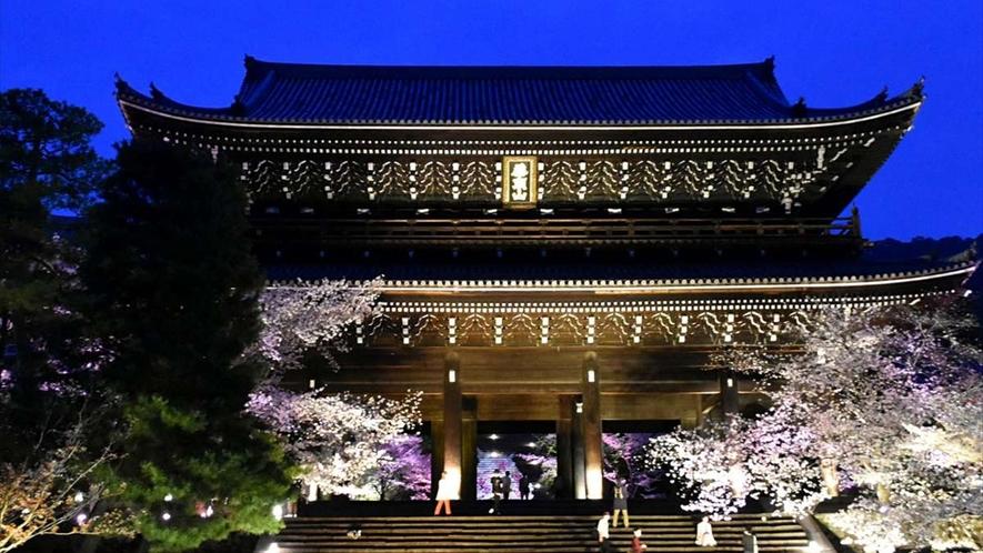 知恩院では、桜の開花時期にライトアップが行われます。