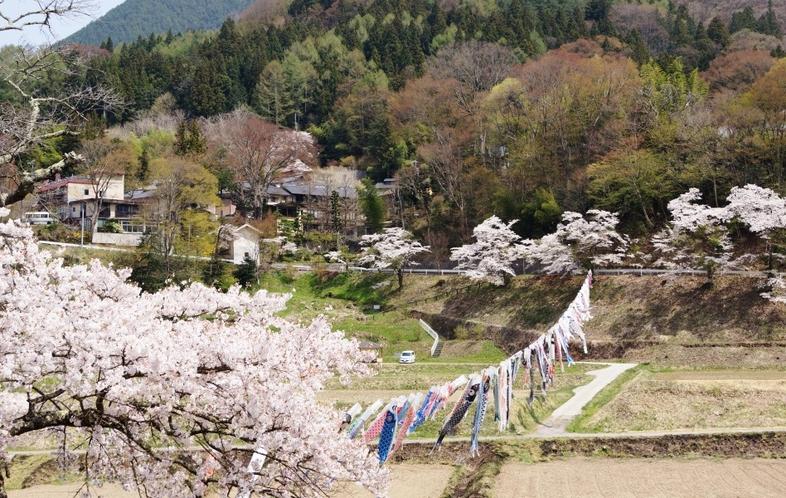 沓掛温泉の桜並木