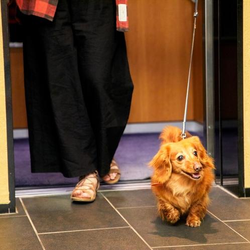 エレベーターも愛犬を歩かせて乗り降り可能