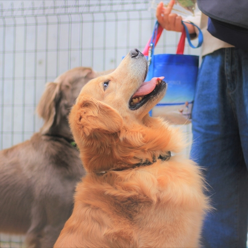 大型犬も小型犬ものびのび過ごせる施設です