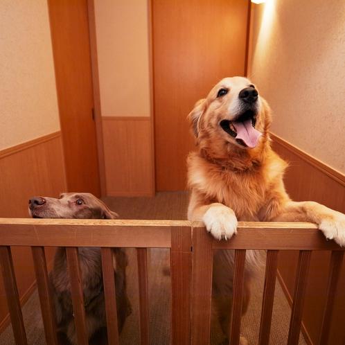 お部屋の入口には飛び出し防止ゲートをご用意