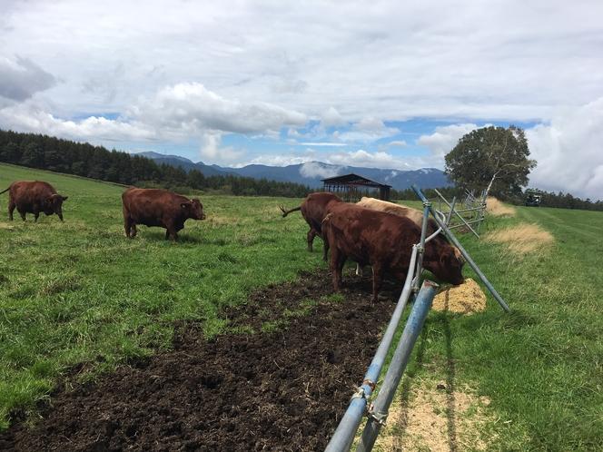 長門牧場:牛、馬、羊やアルパカもいます
