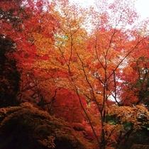 宮島 紅葉(写真提供:広島県)
