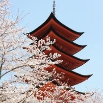 厳島神社 五重塔(写真提供:広島県)
