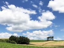 中富良野の風景