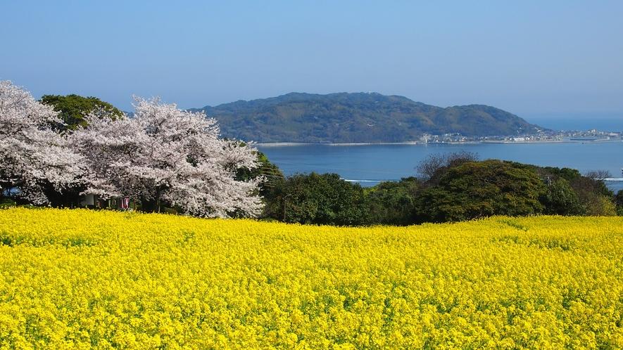 のこのしまアイランドパークの菜の花 →車+フェリー60分 [写真提供:福岡県観光連盟]