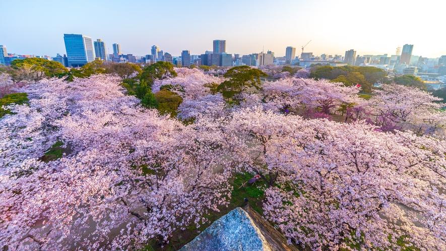 舞鶴公園の桜 →車12分/バス19分 [写真提供:福岡県観光連盟]