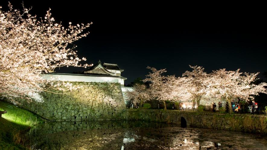 福岡城跡の桜(ライトアップ) →車15分/バス26分 [写真提供:福岡県観光連盟]
