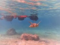 シュノーケリング海亀に遭遇ー3月からお楽しめる宮古島アクティビティ!
