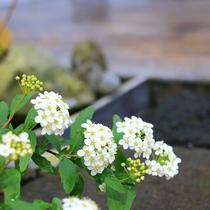 専用ガーデンの可憐な花々