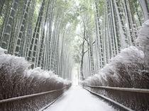 【嵯峨野竹林の道 】嵐山の有名スポットの一つ。冬限定の雪景色は幻想的〈電車で約46分〉