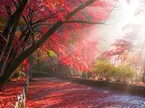 【紅葉スポット・毘沙門堂】モミジが絨毯のように参道を埋め尽くす「敷きもみじ」〈電車約39分〉