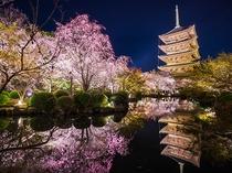 【桜スポット・東寺】京都駅から程近く、五重塔と桜の景色は風情がある〈烏丸線で約30分〉