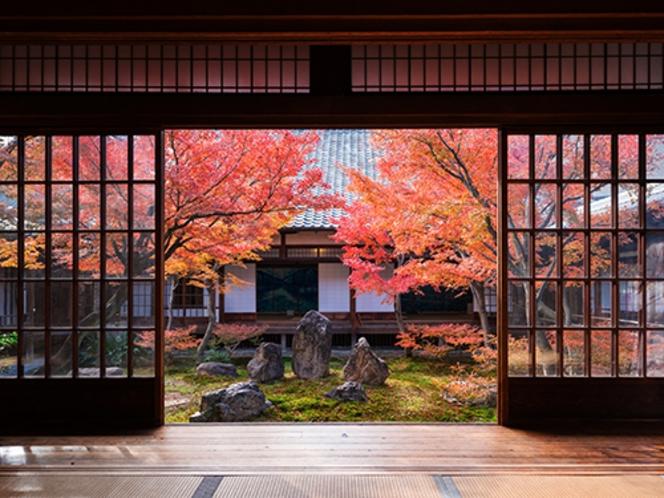 【紅葉スポット・建仁寺】京都最古の禅寺。中庭「潮音庭」では凛とした美しさ〈東西線で約20分〉