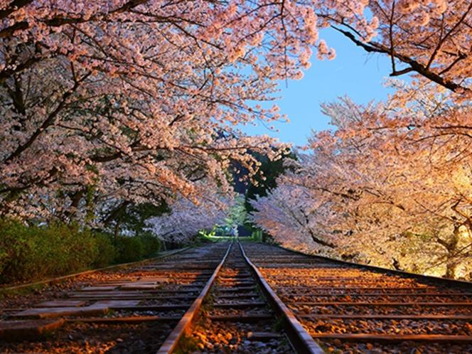 【桜スポット・蹴上インクライン】南禅寺に程近く線路内を歩いて鑑賞できる 〈東西線で約18分〉