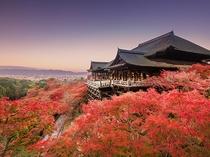 【紅葉スポット・清水寺】清水の舞台からは京都の街並みと紅葉の海を望む〈バスで約43分〉