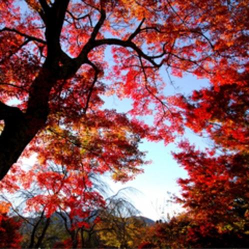 【紅葉】庭園のようす