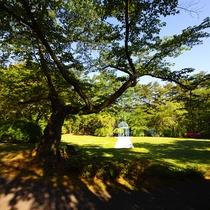 【初夏】庭園の眺め