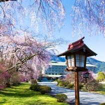【桜】桜の美しいピンク色に包まれた当館