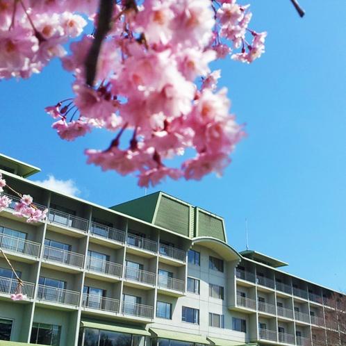 【桜】春の外観
