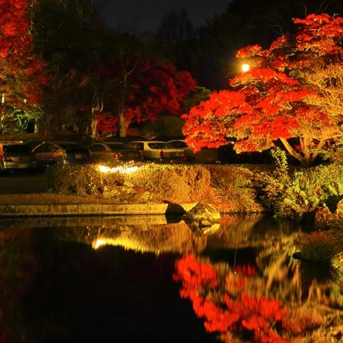 【紅葉】ライトアップされた庭園