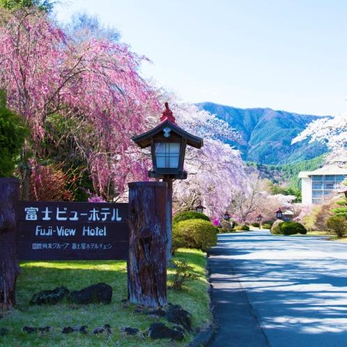 【桜】ホテル正面入口。桜の見頃は例年、4月中旬です。