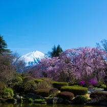 【桜】ホテル正面からの眺め