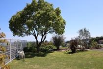 コテージ専用のお庭