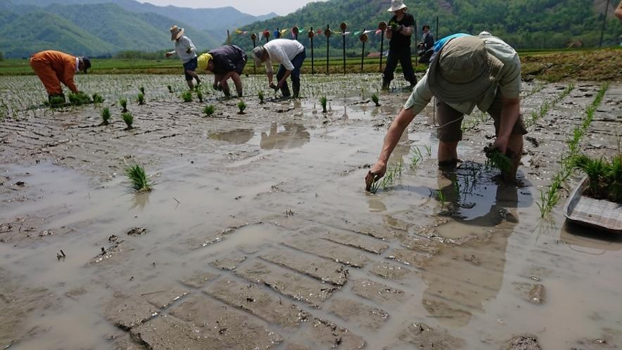 米作り くるみちゃんの田んぼ 田植え