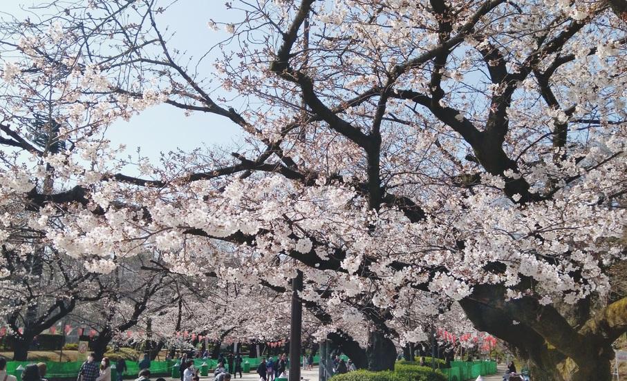 【上野公園(春)】