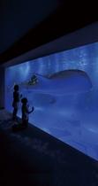 のどじま水族館