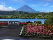 西湖湖畔からの富士