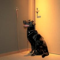 【リードフック】お部屋、館内のいたるところにリードフックが設置されております