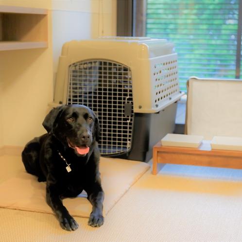 【愛犬用アメニティ】手ぶらでいらっしゃってもOKなほど、愛犬用アメニティが充実