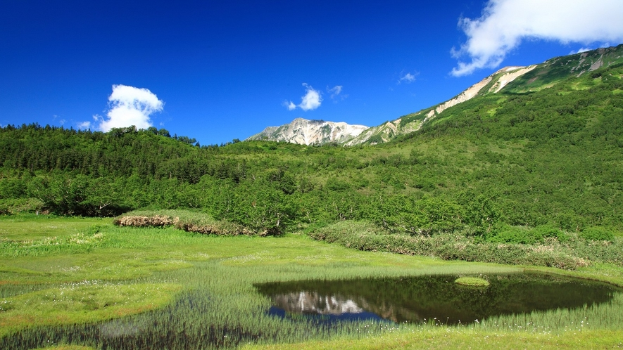 栂池自然園・浮島湿原